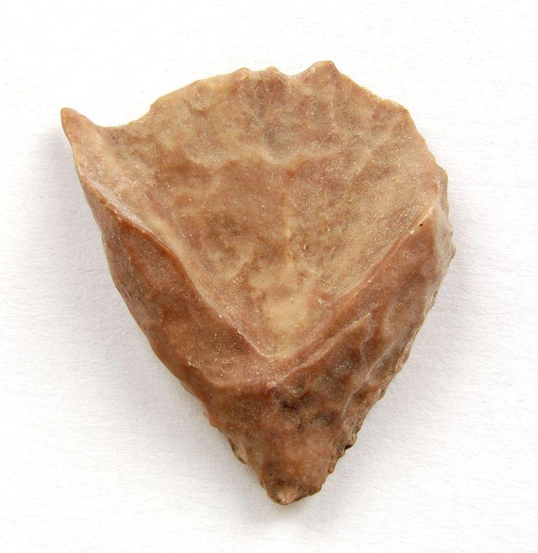 Fosilní korál Calceola sandalina - Smara, Maroko (20)