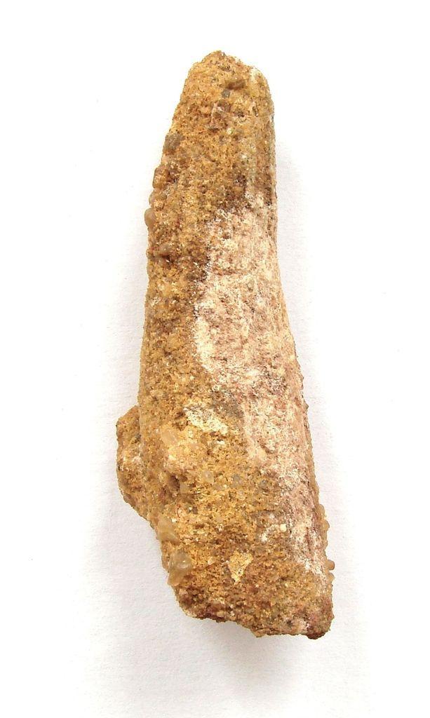 Dinosauří zub Spinosaurus, Taouz, Kem-kem, Maroko (33)