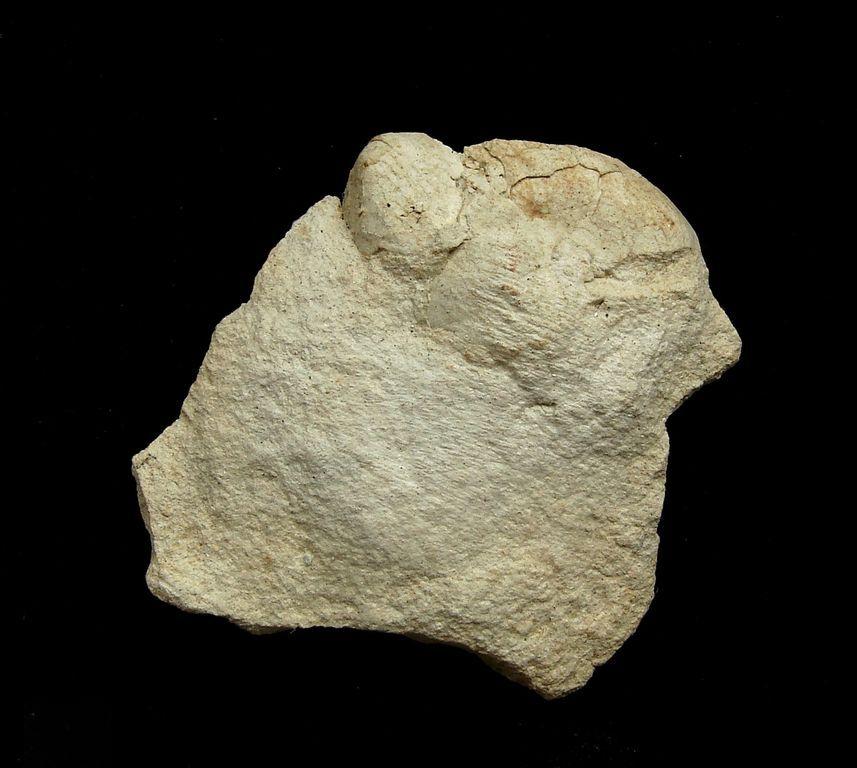 Fosilní ježovka Brissopsis sp. - Zaječí (6)