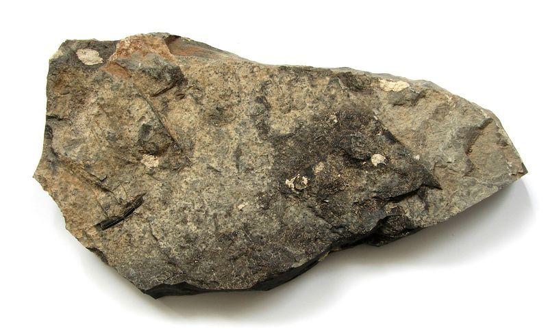Akantoidní ryba Acanthodes gracilis - Boskovická brázda (4)